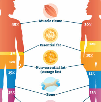Body composition what is a human body made of